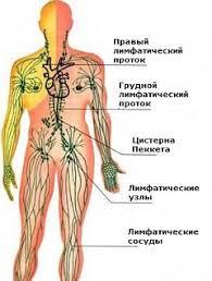 Туберкулез Реферат Основные системы человека