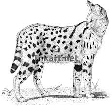 Small Picture African Serval Stock Art Illustration
