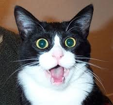 20 Funny Shocked Cat Memes via Relatably.com