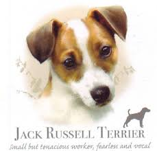 Jack Russell Terrier T Shirt Adult Youth Toddler Many Colors