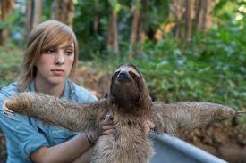 how can i get a job sloths becky cliffe suzi eszterhas