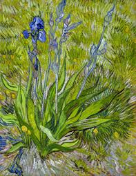 iris 1889 oil on thinned cardboard mounted on canvas 24½ x 19 62 2 x 48 3 cm national gallery of canada ottawa