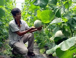 Hướng đến nền nông nghiệp thông minh