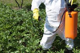 man spraying toxic pesticides or insecticides in vegetable garden stock photo