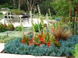 Small Picture Drought Tolerant Landscaping Design Install