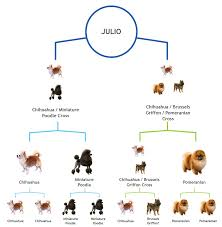Brussels Griffon Weight Chart How Did We Get These Percentages