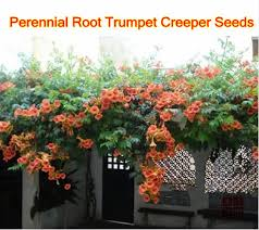 How To Plant And Prune Climbers For The Best ResultsClimbing Plant For Shade