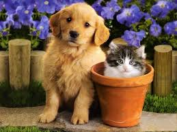 cute kittens and puppies together wallpaper. Simple Cute Teddybear64 Images Kittens U0026 Puppies HD Wallpaper And Background Photos To Cute And Together Wallpaper P