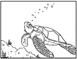 Small Picture Sea Turtles Coloring Pages Miakenasnet