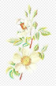 Floral Design Illustration Flower Work Of Art Png