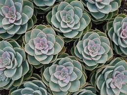 how to create a succulent garden in 7
