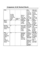 2 02 Skeletal Muscle Chart 2 02 Skeletal Muscle Doc Assignment 02 02 Skeletal Muscle