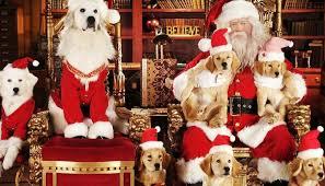 Les 50 meilleurs films de Noël à voir en famille à la maison ou au ciné    MOMES.net