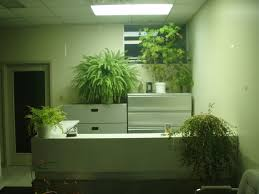 office greenery. Office-plant Office Greenery