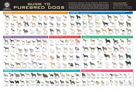 Akc Dog Breeds Pictures Guide To Purebred Dogs Official