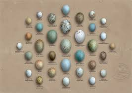 Pictures Of Birds Yahoo Search Results Tus Me Gusta En