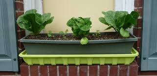 diy self watering window box planter with lettuce