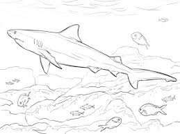 Small Picture Realistic Bull Shark coloring page Free Printable Coloring Pages