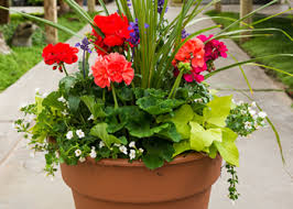 Small Picture full sun container In the garden Pinterest Plants Container
