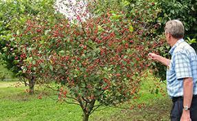 The Tastiest Berries That Grow Wild In North AmericaFruit Trees In Kansas