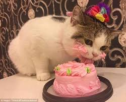 Happy Birthday Cakes Why Do We Love Them So Much