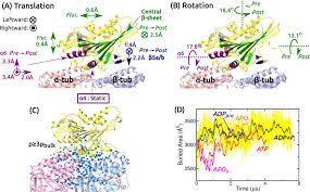 mobility of kinesin on the mt