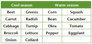 Vegetable Sunlight Requirement Chart Planning A Garden How To Plan A Vegetable Garden