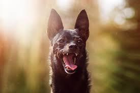 「dog manner」の画像検索結果