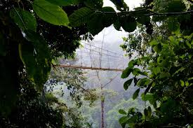 mistico arenal hanging bridge park a photo essay gone the while hiking the 1 9 mile trail you will see suspension bridges above and below you all of them are made of metal and supported by thick cables
