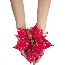 Mini Weihnachtsstern Primero Rot Weiß Gefleckt Topf ø Ca 6 Cm Euphorbia