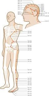 Gallbladder Acupuncture Points Acupuncture Acupuncture