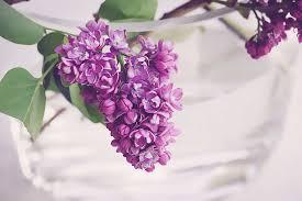 Farbe Violett Wirkung Und Bedeutung Der Farbe Violett Lichtkreis