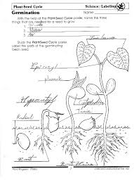 Parts Of A Seed Worksheet: Parts Of A Seed Clipart Coloring ...