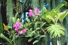 Colors Of The Dendrobium Orchid Home Guides Sf Gate