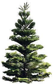 Hawaii Christmas Stock Images RoyaltyFree Images U0026 Vectors Christmas Tree Hawaii