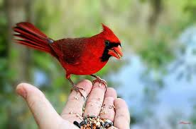 Image result for feeding birds