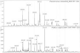 parison of pseudomonas stutzeri and proteus vulgaris maldi tof m spectra isolates s04