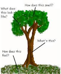 how to write a descriptive essay about nature com how to write a descriptive essay