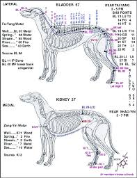 Canine Acupuncture Meridian Chart Canine Points