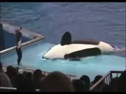 イルカ ショー 事故