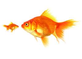 fish might be shrinking