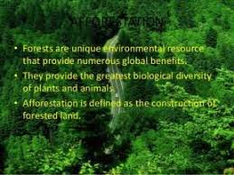 global warming and tree plantation essay  global warming and tree plantation essay