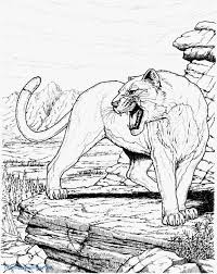 sure fire cougar coloring pages inspiring mountain lion elegant realistic new