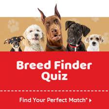 Dog Compatibility Chart Dog Matchup Dogtime