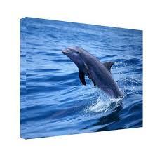 wall art chris doherty dolphin canvas  on dolphin canvas wall art with chris doherty dolphin canvas wall art ready2hangart