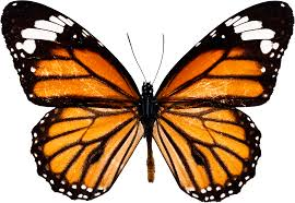Image result for image of a butterfly