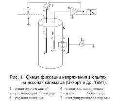 Реферат Методы измерения ионных токов Этот ток течет через электроды расположенные по разные стороны мембраны в таком направлении что мембранный потенциал вновь становится равным управляющему