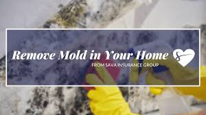 how to remove mold in your home sava