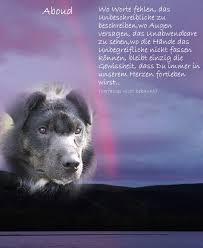 Sprüche Hund Tot Italiaansinschoonhoven