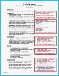 Bar Back Resume Resume Template